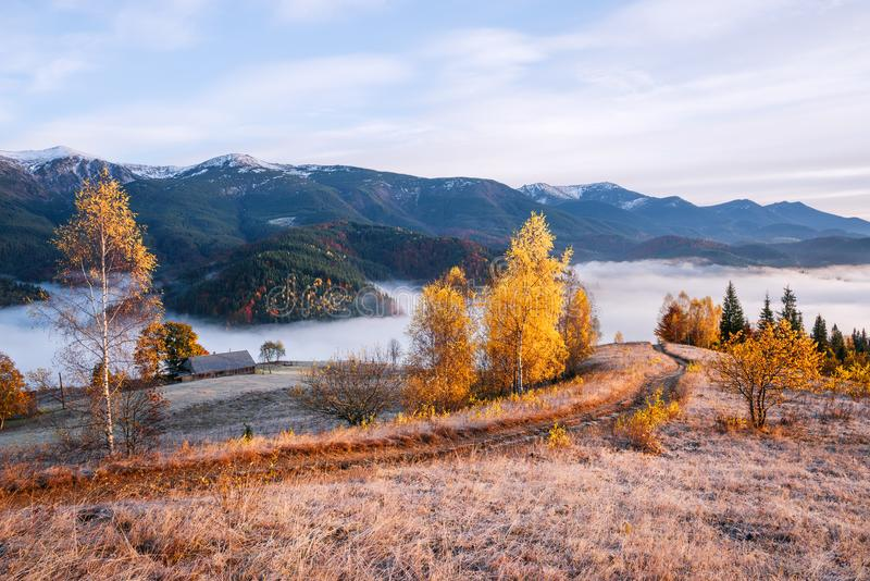 Autumn landscape in the mountains. Picturesque mountain road. Autumn landscape with a morning mist. Beautiful forest in the hills. Birches with yellow leaves royalty free stock photos