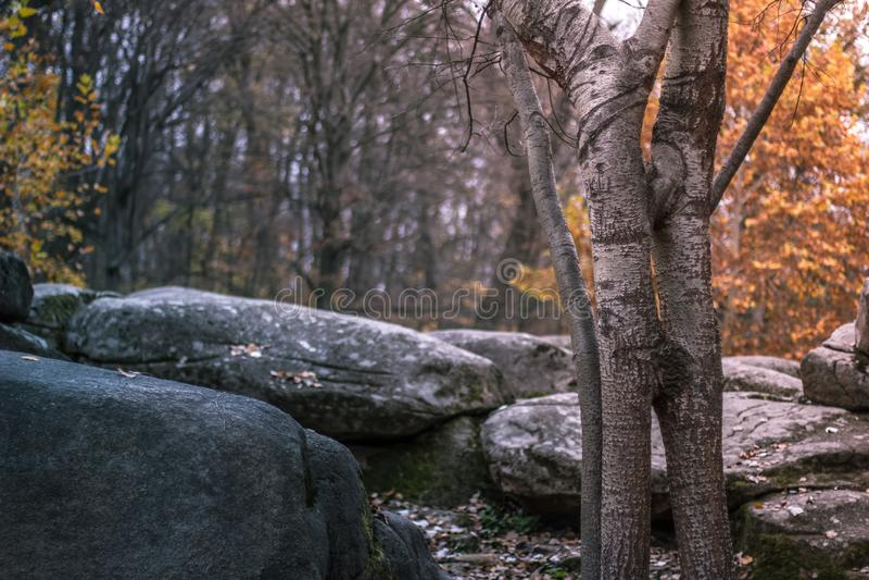 Autumn landscape in the national park Sofiivka, Uman, Ukraine. The most beautiful plases of Europe stock image