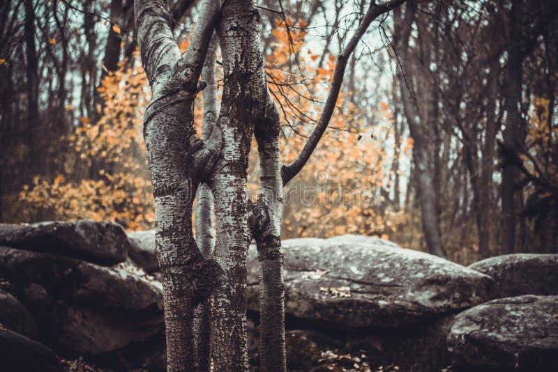 Autumn landscape in the national park Sofiivka, Uman, Ukraine. The most beautiful plases of Europe stock photo