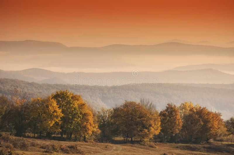 Download Autumn Landscape With Orange Trees In Morning Ligh Stock Image - Image: 22820563