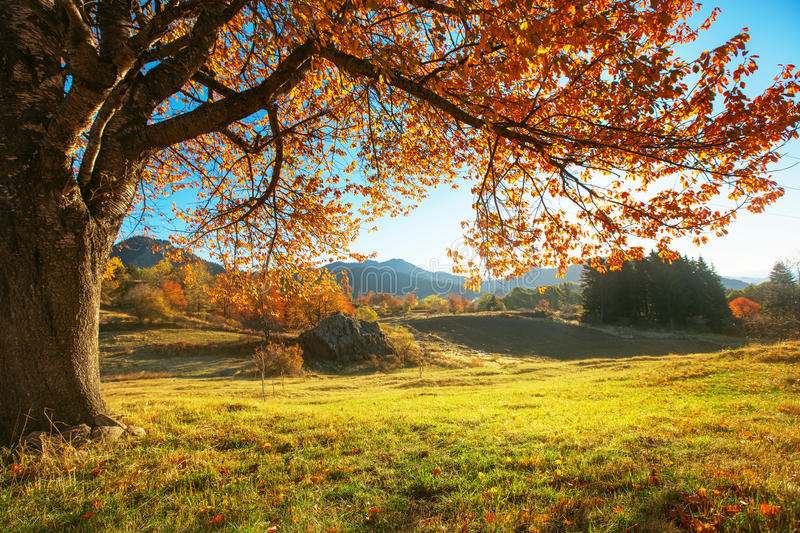 Autumn landscape. And the orange trre royalty free stock photos