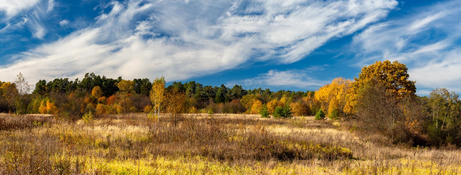 Autumn landscape. Panorama of the autumn forest behind the field. stock images