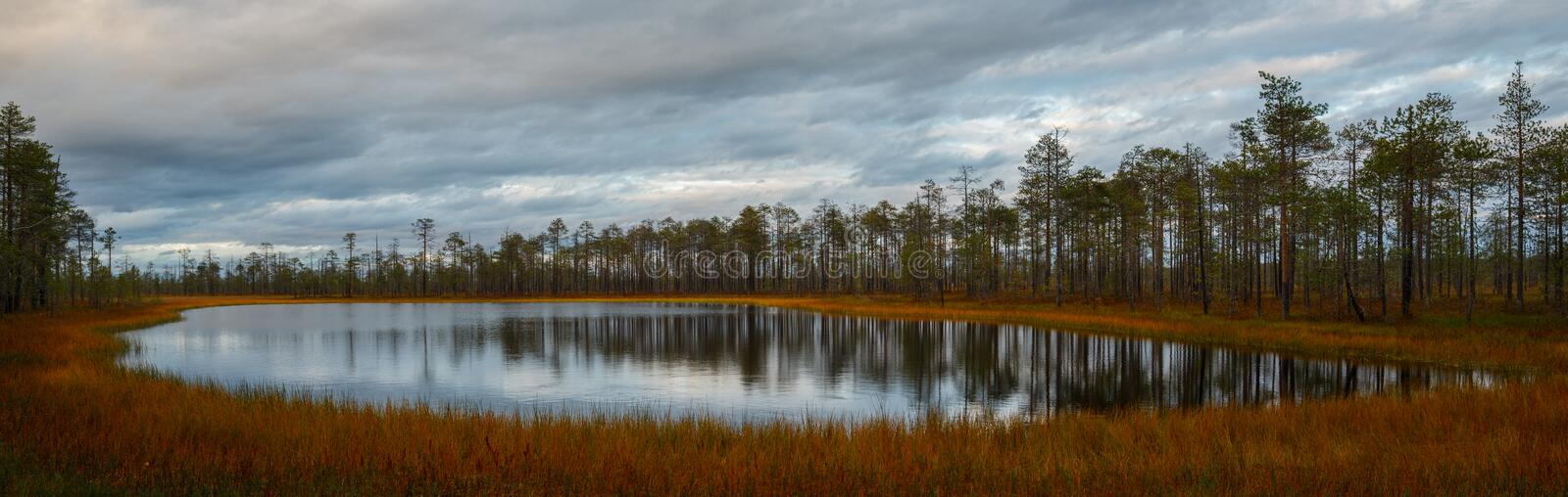 Autumn landscape panorama, lake in the marshland in the forest stock images