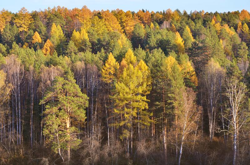 Gorgeous autumn landscape panorama of a scenic forest stock photo