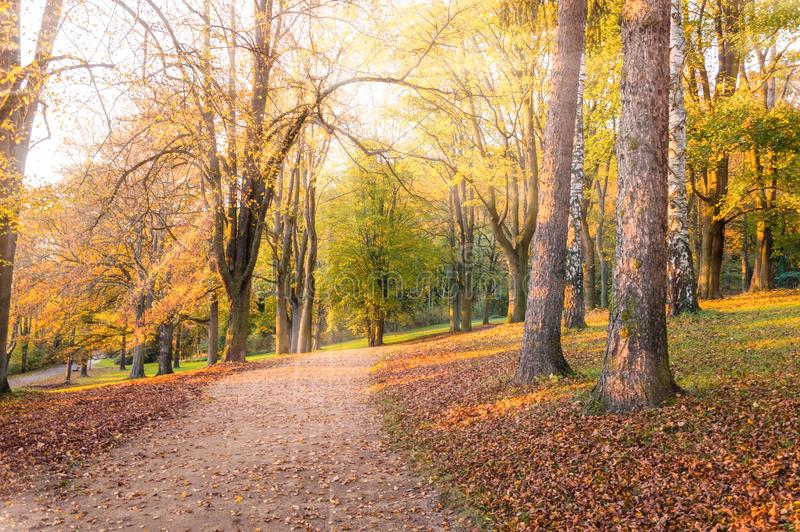 Autumn landscape: Park alley with yellow trees and fallen leaves lit with sunlight stock photo