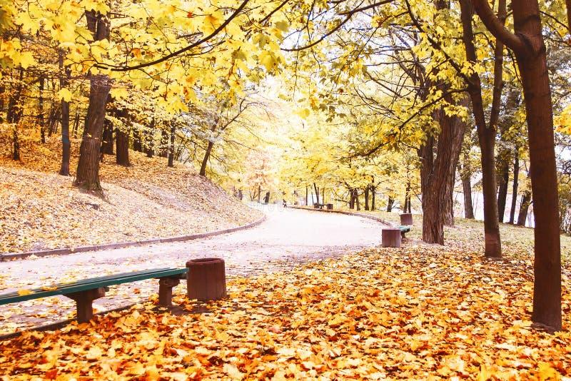 Autumn landscape. Autumn Park. Autumn days. Autumn mood. Carpet. Of leaves stock images
