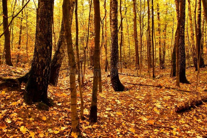 Autumn Landscape Parque na queda Outono dourado fotos de stock