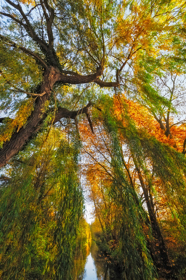 Autumn landscape. The picture shows a tree with colorful discolored foliage and a river royalty free stock photography