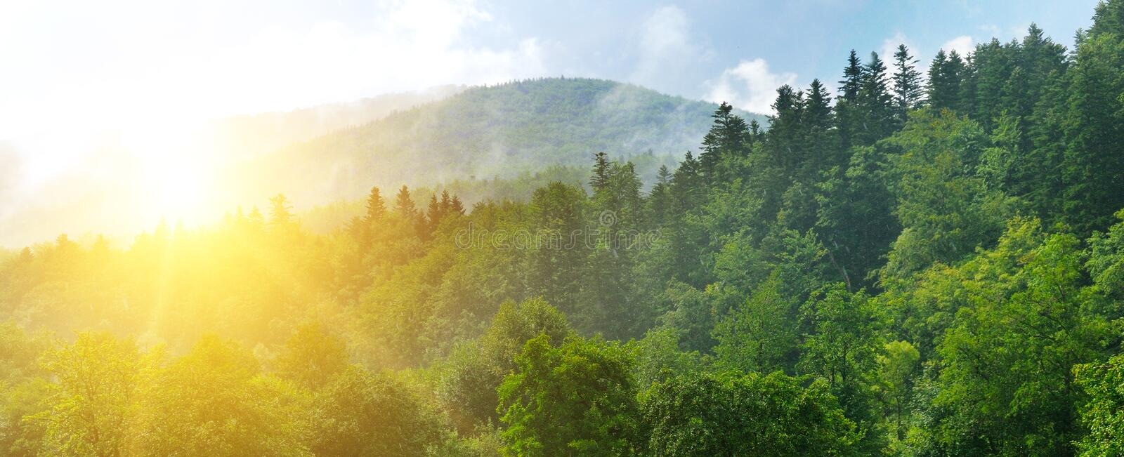 Autumn landscape with picturesque forest and sun. Wide photo stock photography