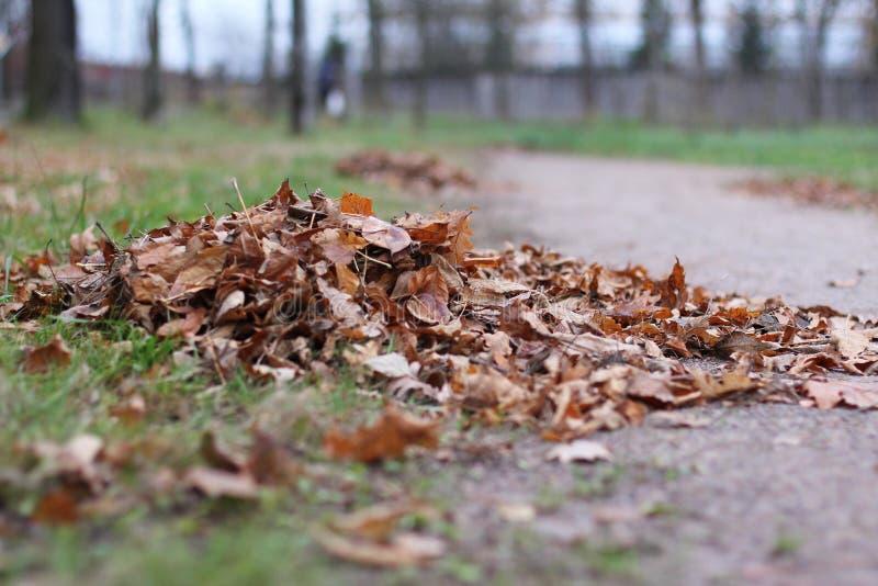 Autumn Landscape Pilha das folhas caídas imagem de stock