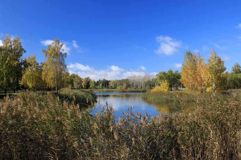 Autumn landscape - pond in the park stock photography