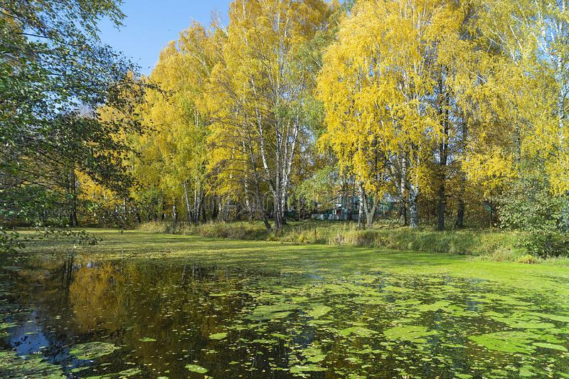 Autumn landscape with pond in village royalty free stock photos
