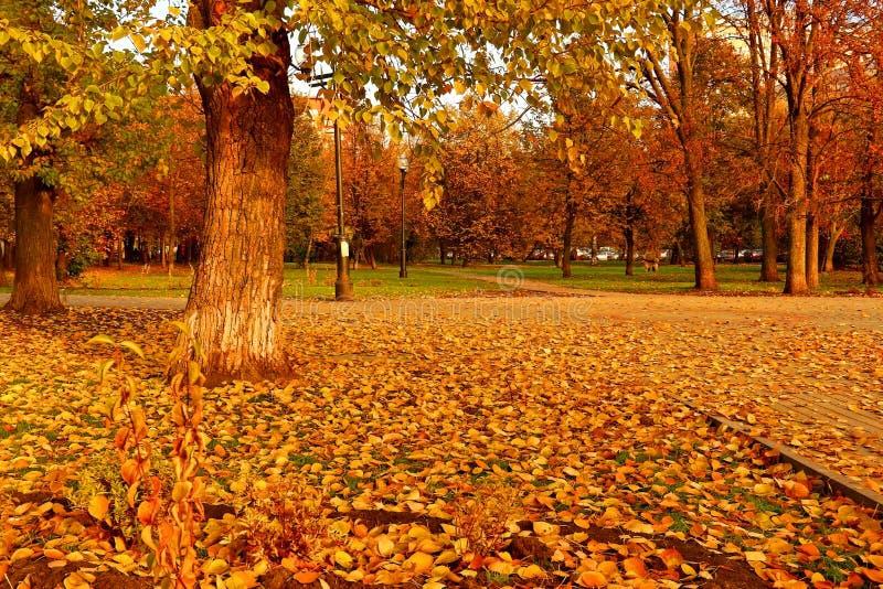 Autumn Landscape Quadrado de cidade na folha dourada do outono foto de stock royalty free