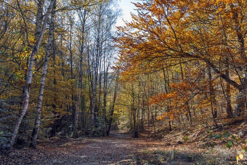 Autumn Landscape que sorprende con la ciudad cercana amarilla del diablo en la montaña de Radan fotos de archivo