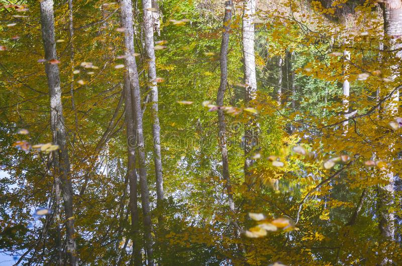 Autumn landscape reflecting on small dirty pond royalty free stock photos