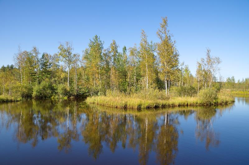 Beautiful autumn water landscape on a Sunny day. Autumn landscape with a river and birches on a Sunny day royalty free stock photography