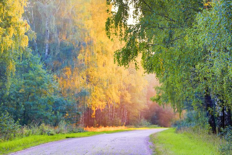 Autumn landscape with road and beautiful yellow colored trees. Seasonal autumn landscape. stock images