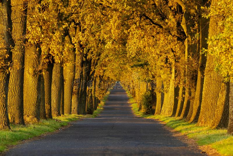 Autumn landscape road with colorful trees . Great oak alley.Autumn foliage with country road royalty free stock images
