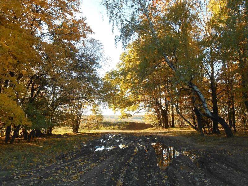 Landscape in golden autumn on the marge of forest with road and puddles. Landscape in golden autumn in the field in evening with rural road with puddles on the stock photo
