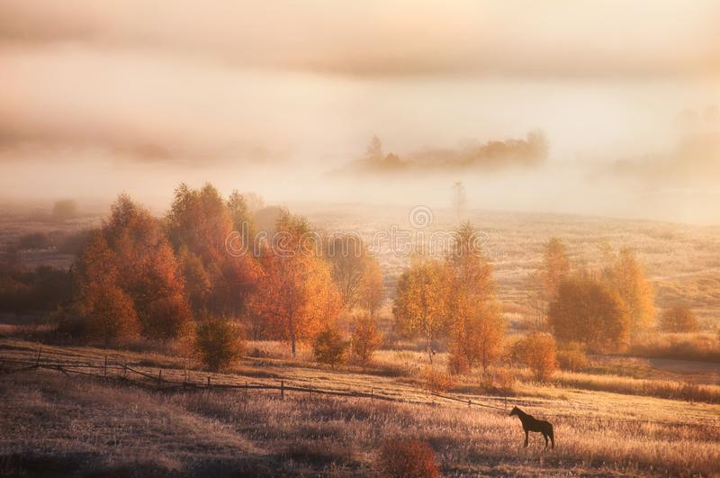 Autumn landscape in Russia. Morning nature royalty free stock image
