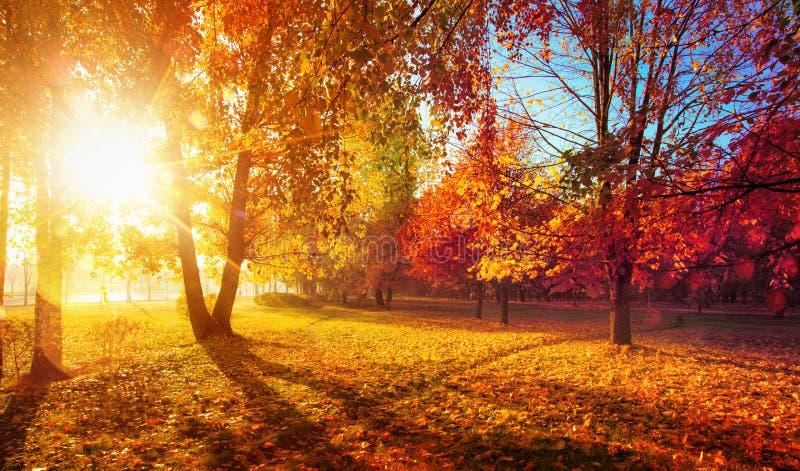 Autumn Landscape Scena di caduta Alberi e raggi delle foglie al sole fotografie stock libere da diritti