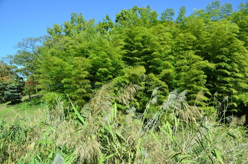 Autumn landscape. A scene telling autumn scenery A view of maple tree stock photo