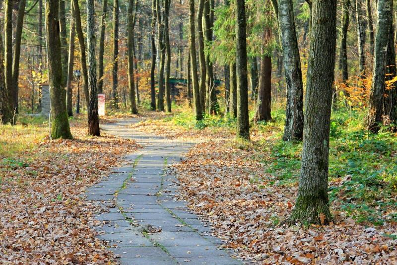 Autumn Landscape Schmaler Pfad stockfotografie