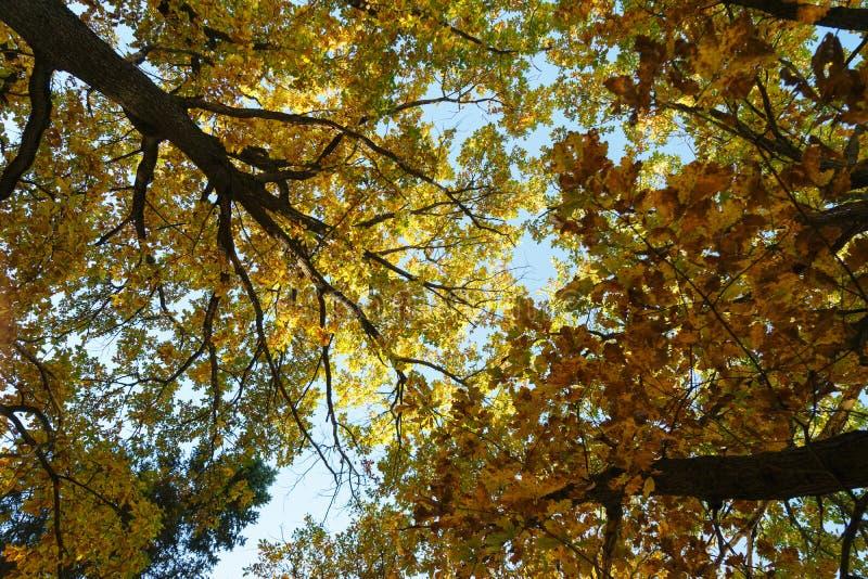 Autumn Landscape Silhouettes des arbres et du feuillage orange d'automne lumineux contre un ciel clair bleu photographie stock libre de droits