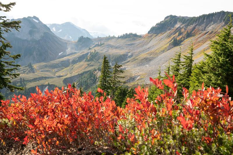 Autumn landscape of snow mountain. And plants in Mt. Baker Hwy, Deming, USA royalty free stock images
