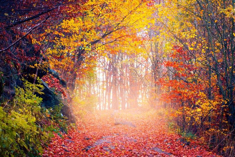 Autumn Landscape Strada coperta dal fogliame di caduta nella foresta di autunno fotografie stock