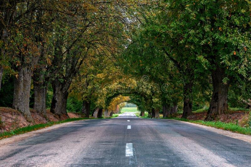 Autumn Landscape Strada rurale sola con i vicoli decidui fotografie stock libere da diritti