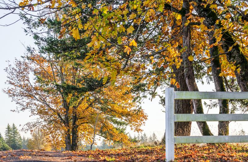 Autumn landscape of sunlit foliage of trees behind fence on the. The road leading into the distance beyond the horizon with autumn yellowed trees on the side of stock photos