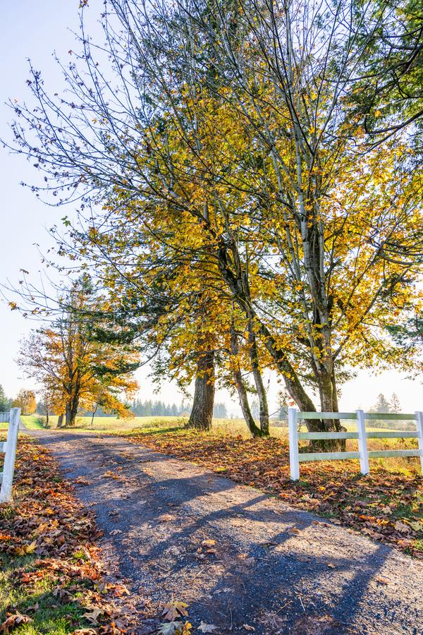 Autumn landscape of sunny day filling the road with light and tr. Road leading into the distance beyond the horizon with autumn yellowed trees is like a symbol royalty free stock photography
