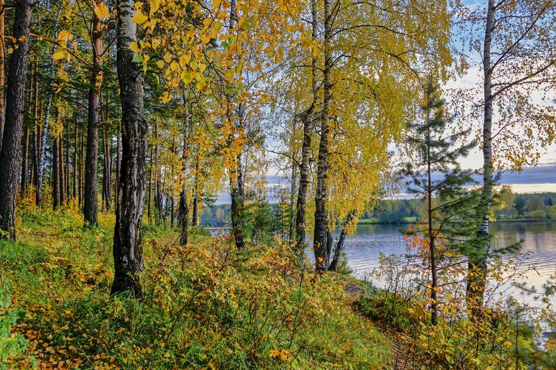 Autumn landscape sunset in the forest by the lake. Beautiful view in forest during sunset in autumn evening. royalty free stock photo