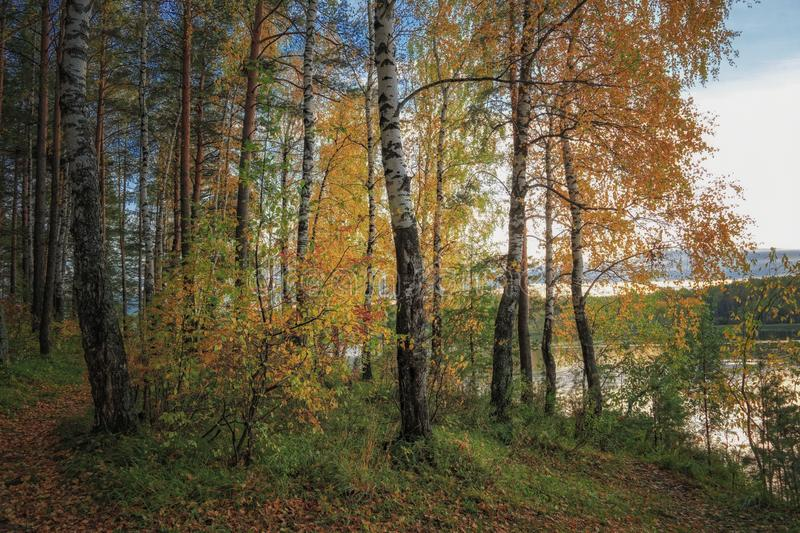 Autumn landscape sunset in the forest by the lake. Beautiful view in forest during sunset in autumn evening. stock image