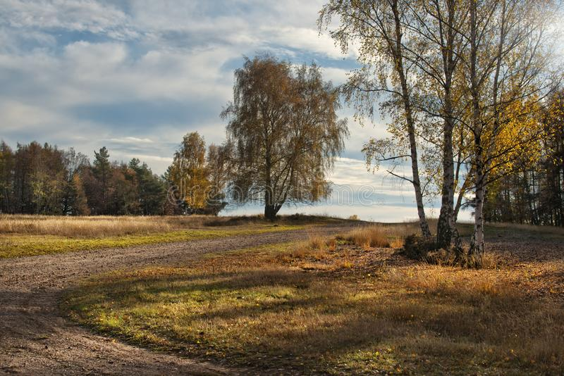 Autumn landscape with tree and path stock images