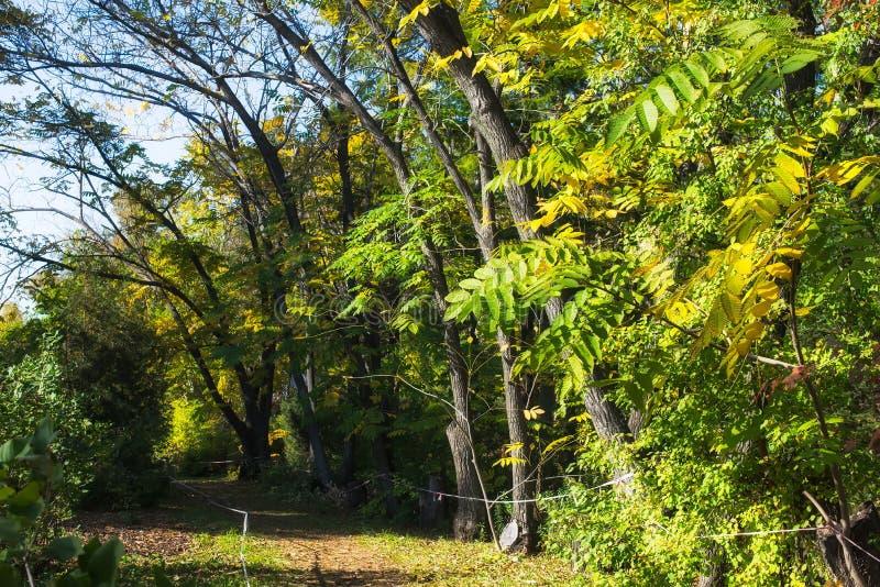 Autumn landscape in a tropical garden. Arboretum. stock photo