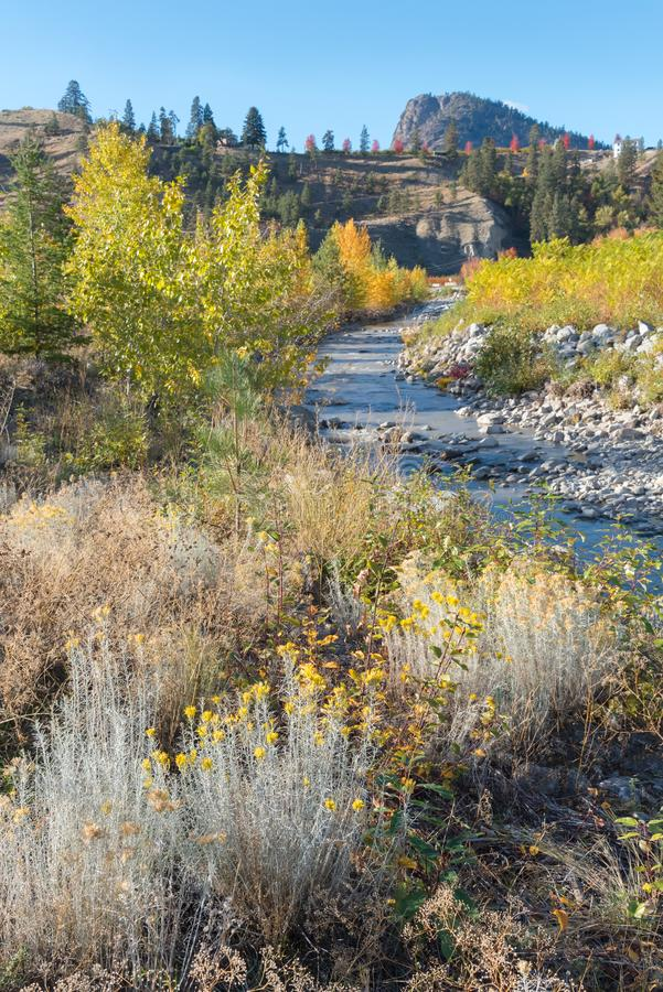 Creek running through autumn forest with mountain and blue sky in background royalty free stock photography