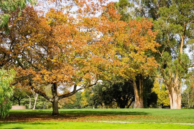 Autumn landscape, Vasona Lake County Park, San Francisco bay area, Los Gatos, California royalty free stock images