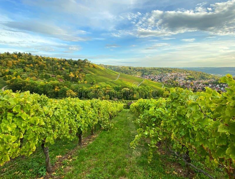 Autumn landscape vineyard countryside blue sky royalty free stock image