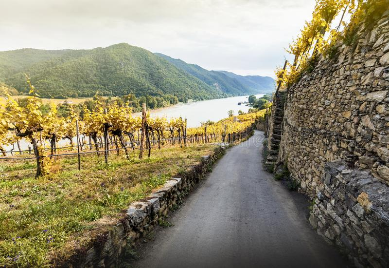 Autumn landscape of Wachau valley, Danube river, Austria.  stock photos