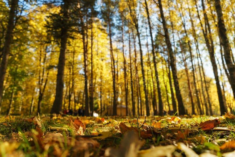 Autumn Landscape Warme de herfstdag in een helder kleurenpark Oranje gebladerte en bomen in het bos royalty-vrije stock fotografie