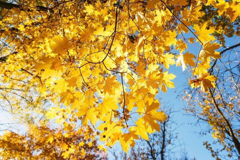 Autumn Landscape Warme de herfstdag in een helder kleurenpark Oranje gebladerte en bomen in het bos royalty-vrije stock afbeeldingen