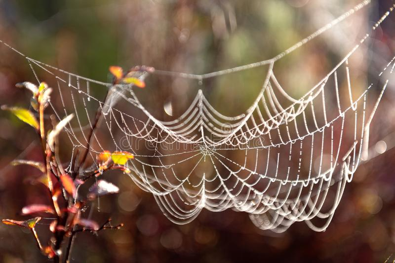 Autumn landscape with water drops on a spider web royalty free stock photos