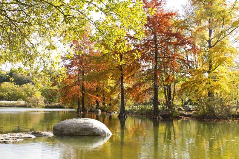 Autumn landscape at Westpark with lake stock photo