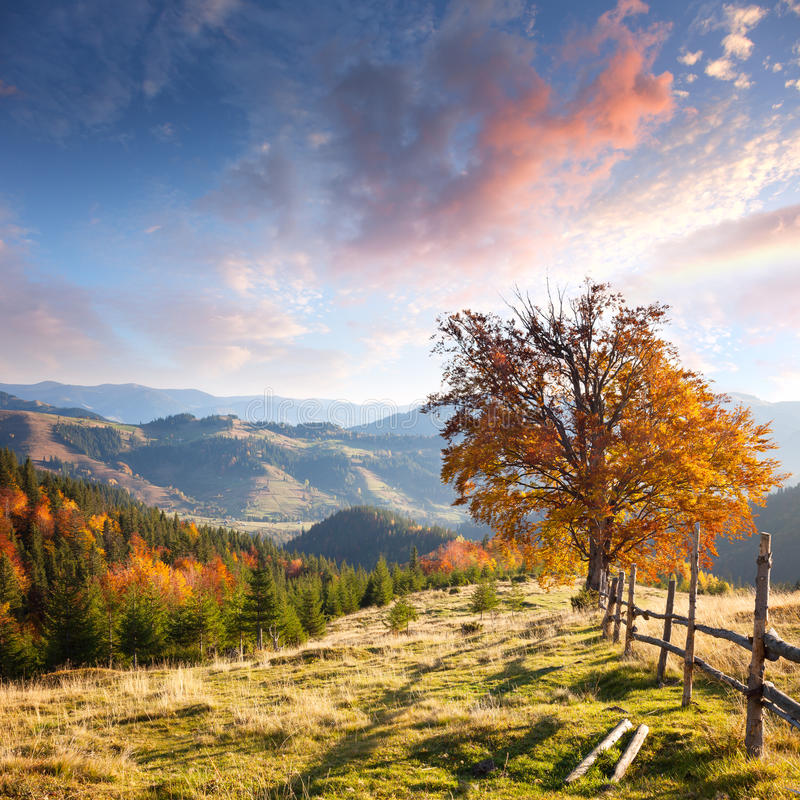 Free Autumn Landscape With Big Yellow Tree And Mountain Panorama Stock Image - 58601931