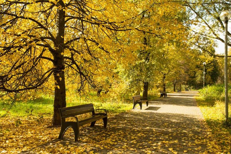 Autumn Landscape With Wooden Benches onder Bomen met Geel Lea royalty-vrije stock fotografie