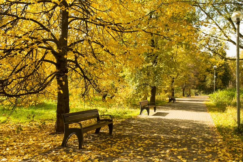 Autumn Landscape With Wooden Benches sob árvores com pasto amarelo fotografia de stock royalty free