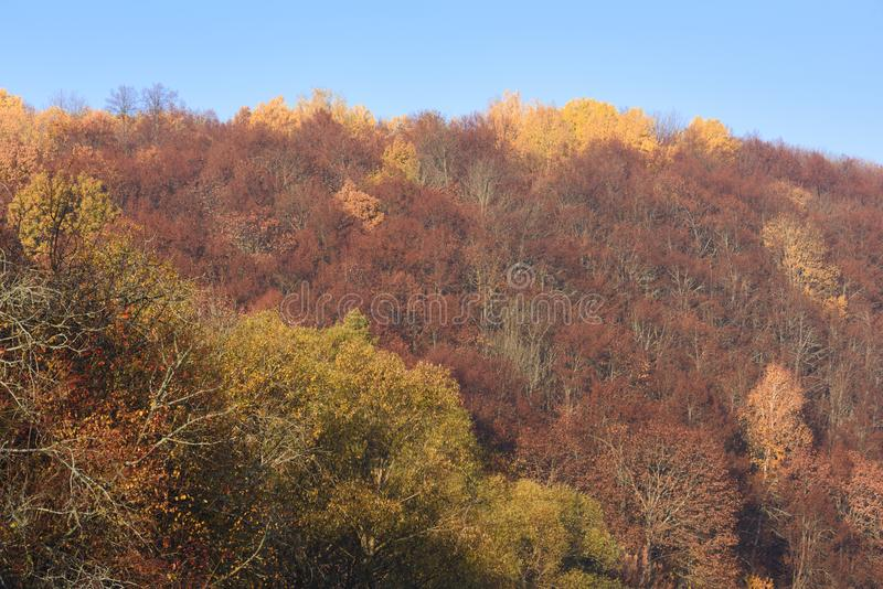 Autumn landscape. Yellow and red trees massive on hills in sunny. Daylight royalty free stock image