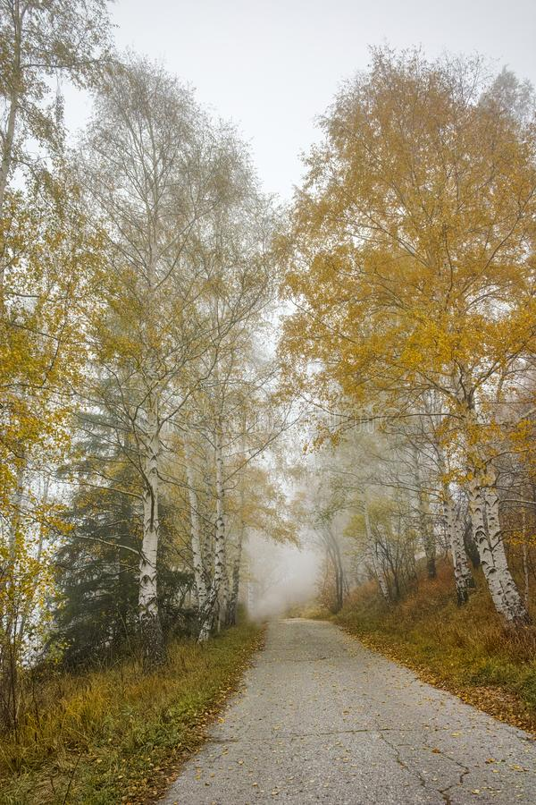 Autumn Landscape with yellow trees and fog, Vitosha Mountain, Bulgaria stock images
